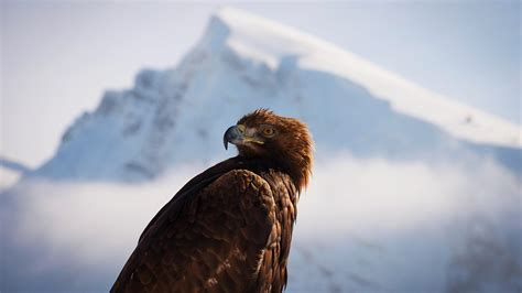 BBC One - Planet Earth II, Mountains